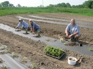 The Happy Planters