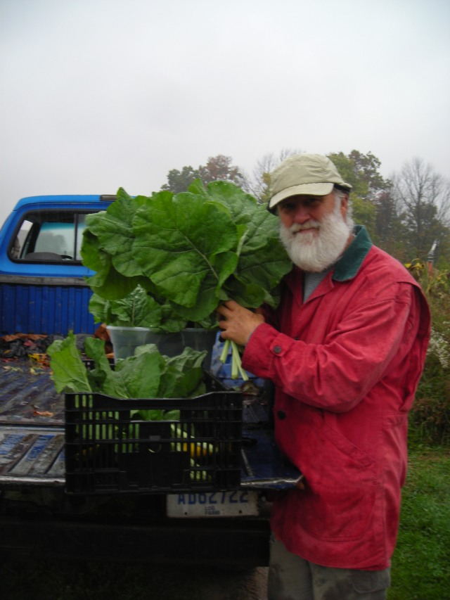 Just-picked Madeley Kale